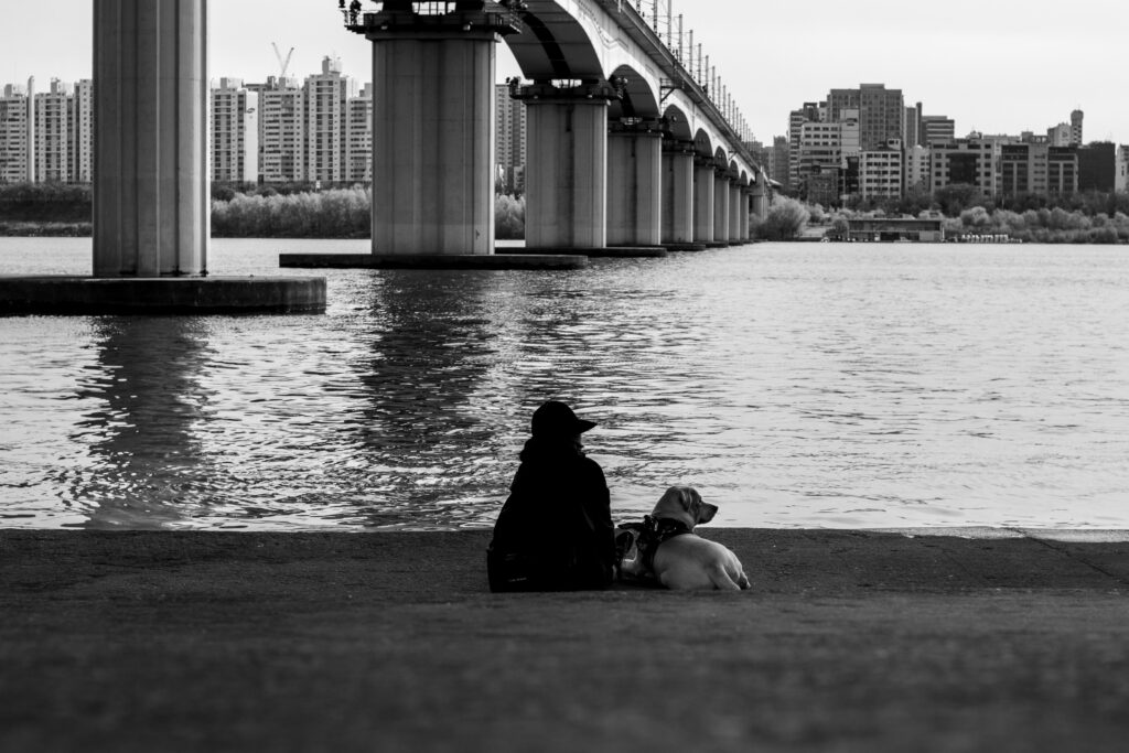 A park on the Han River in dog-friendly Seoul