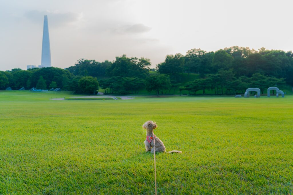 Dog in Seoul looking at Lotte Tower